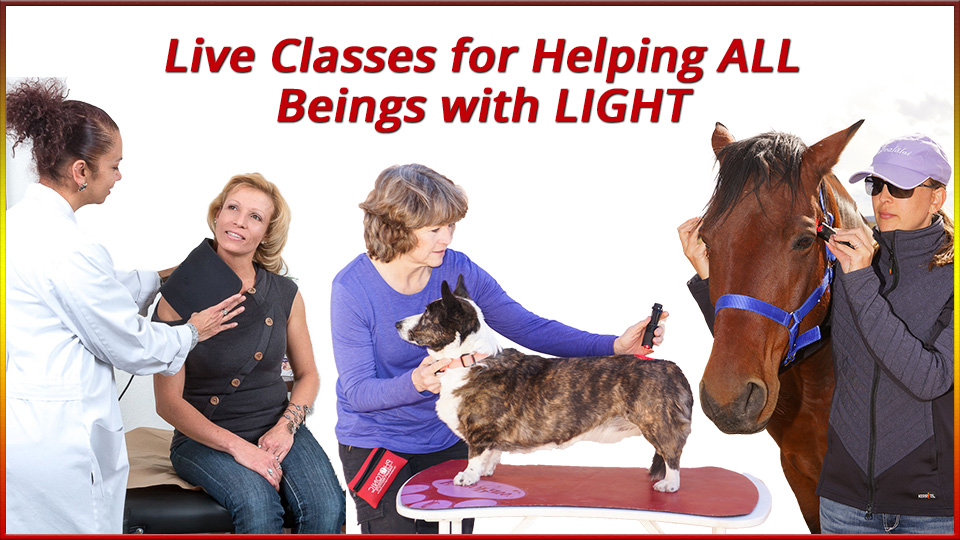 Live Classes for Helping All Beings with LIGHT